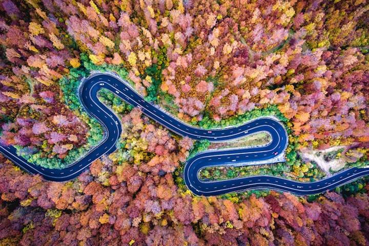 rừng cây lá đỏ tuyệt đẹp ởBogata, Romania - Ảnh chụp từ flycam